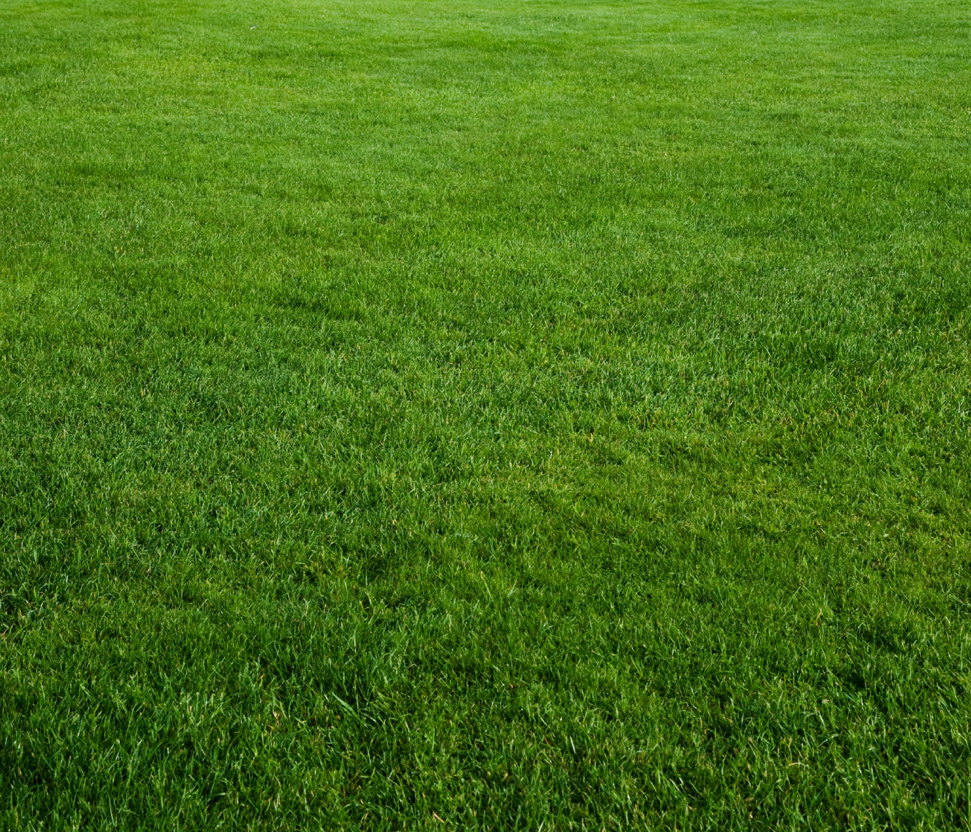 Robson Turf Growers And Suppliers Of Quality Turf